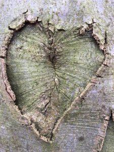 Boom met hart - Lente in je Leven